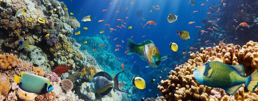 Кухонные фартуки подводный мир