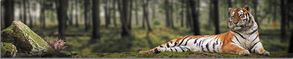 tigr-park-abs-plastik